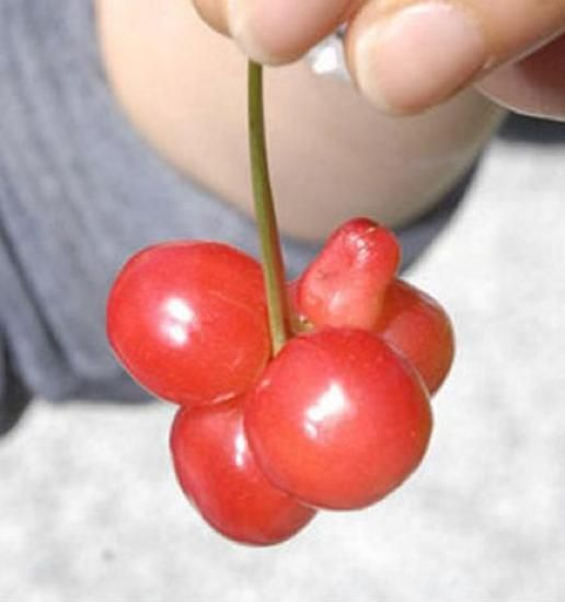 erotic red cherry