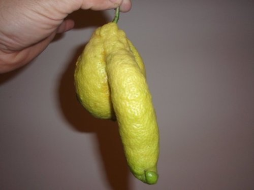 erotic lemon penis