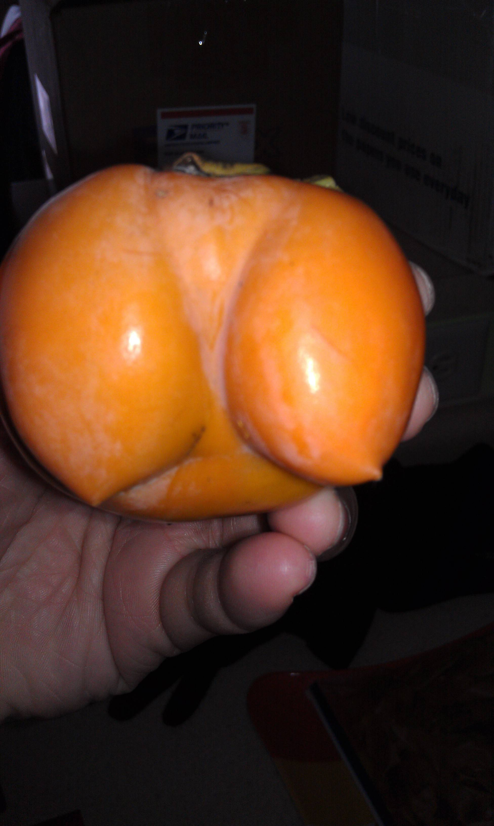 persimmon's boobs