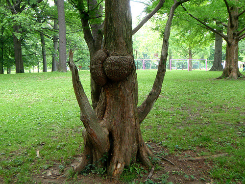 Sexually Confused tree