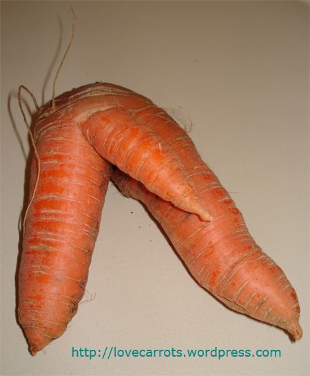 sexy carrot with penis
