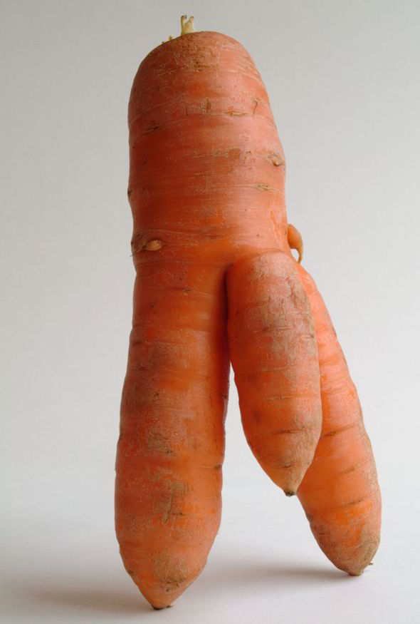 carrot with big penis