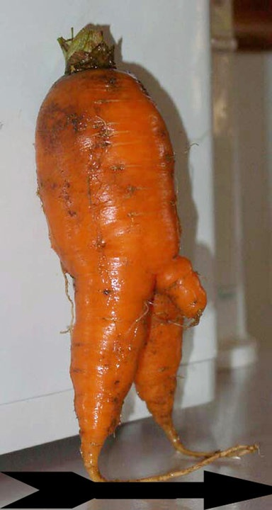 carrot with small penis