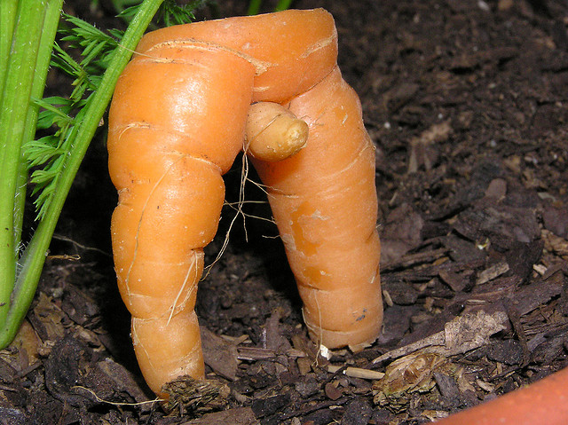 sexy carrot from my garden
