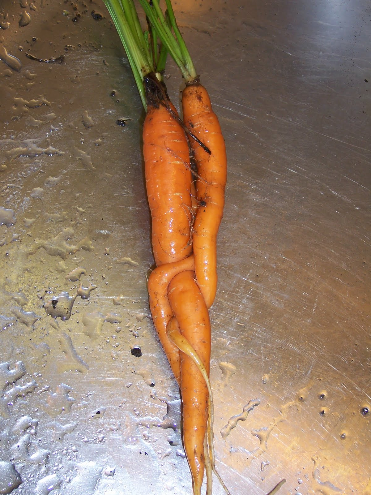 two carrots love story