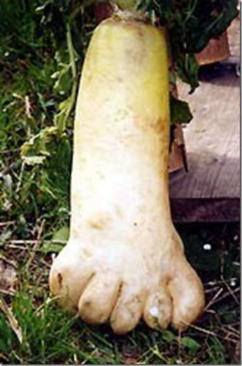 foot shape vegetable