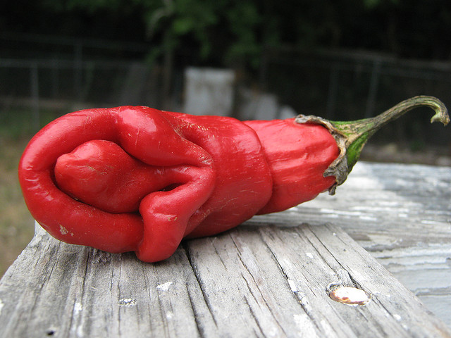 vagina red pepper