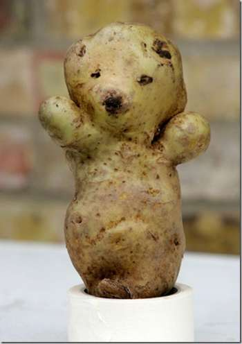 teddy bear potato
