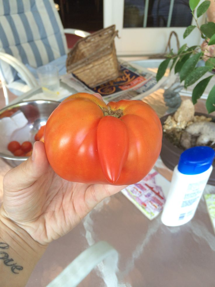 tomato with tail